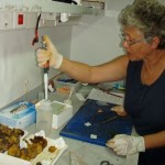 De nouveaux antibiotiques dans les océans
