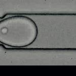 L'objectif de l'IPGG est de porter la révolution microfluidique