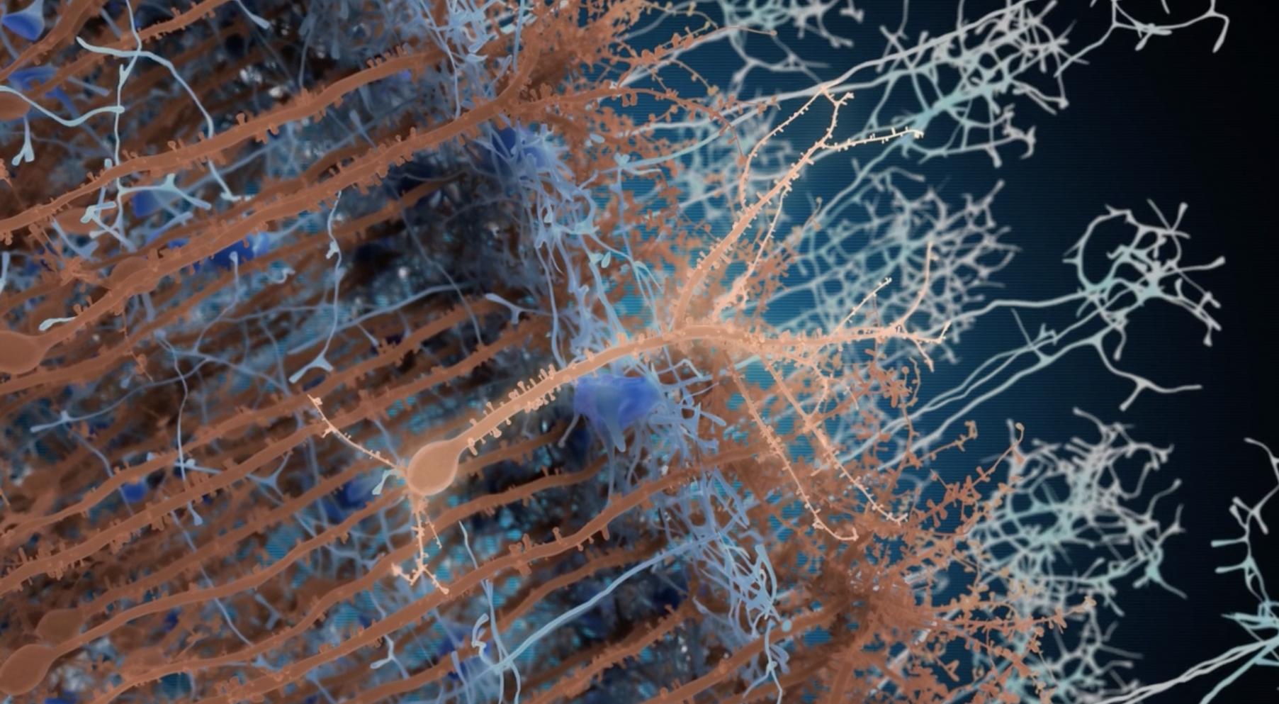 neuron (2)