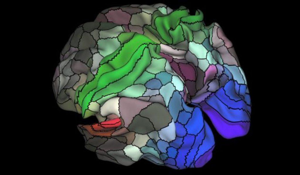 Une nouvelle cartographie du cerveau