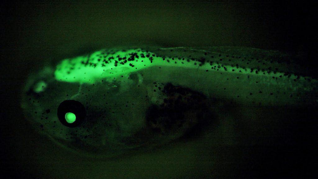 La biosurveillance des micropolluants attend son décollage
