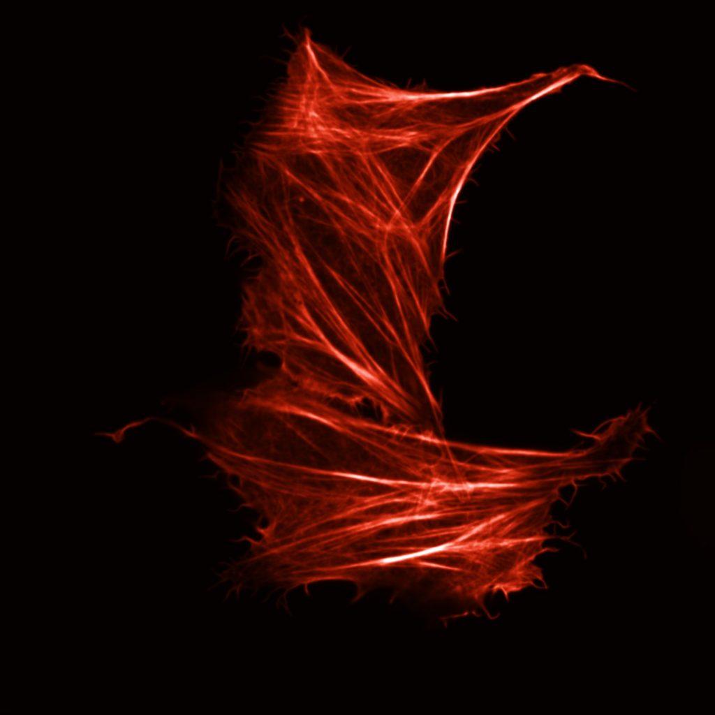 mScarlet (2)