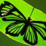 Ynsect : une entoraffinerie en 2016