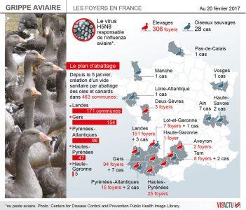860_visactu-grippe-aviaire-vers-labattage-des-600-000-canards-dans-les-elevages-des-landes-15a604e8b42