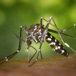 Stratégies de lutte innovantes contre les moustiques : des essais en vue
