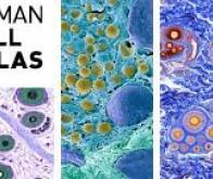 edito_latlas_des_cellules_humaines_une_aventure_plus_vaste_que_la_cartographie_du_genome