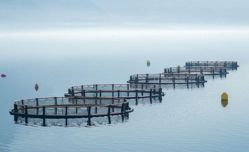 aquaculture-cages-1-496771542-credit-radzonimo