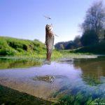 InnovaFeed produit à grande échelle des farines d'insectes pour l'aquaculture