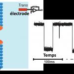 La nanoprotéomique vient de naître